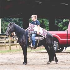 Adkins Quarter Horses