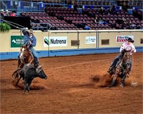 Cudd Quarter Horses, LLC