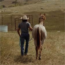 Bratz Equine