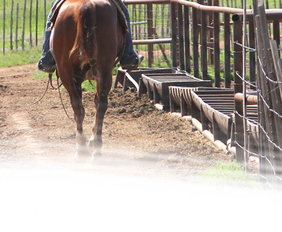 Ranch/Working Horses