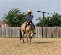 4 yo AQHA mare, Ranch Riding, Liberty Horse, Cow Horse, Versatile Performance Horse