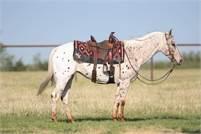 Beginner safe / Ranch / trail pony