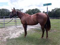 2006 Daughter of Dual Pep … Brood Mare 2 in 1 Package!!
