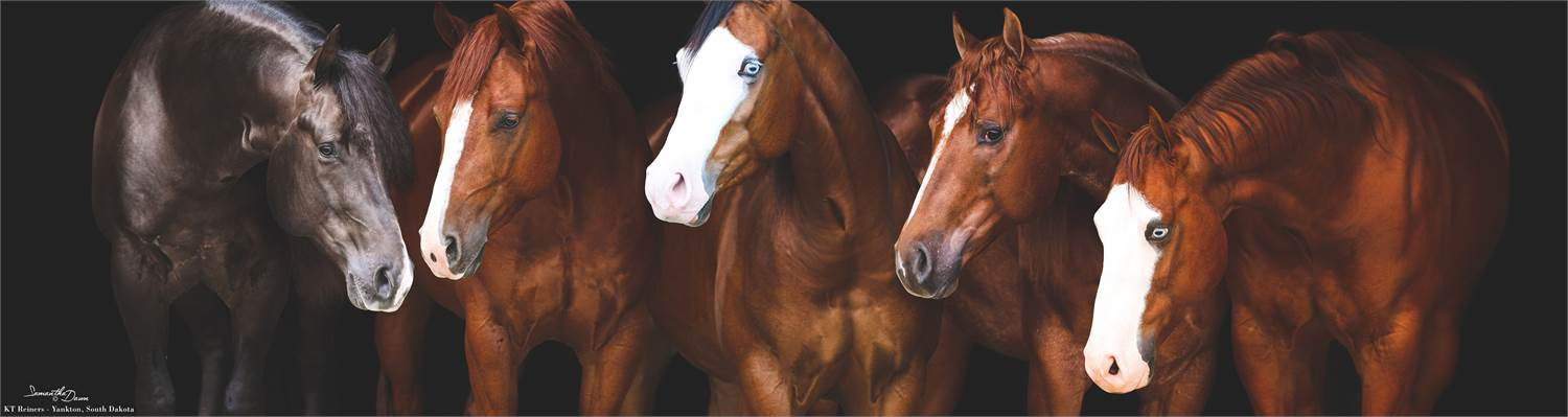 EQUINE RELATED CLASSIFIEDS